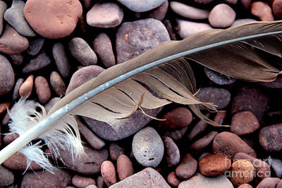 Photograph - Feather 3 by A K Dayton