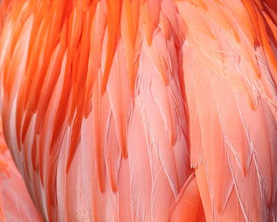 Photograph - Feather Abstract 1 by Angela Murdock