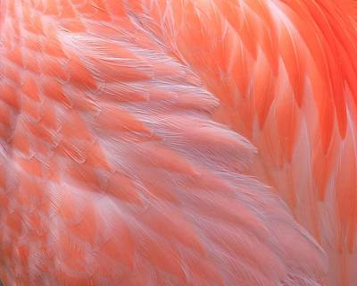 Photograph - Feather Abstract 2 by Angela Murdock