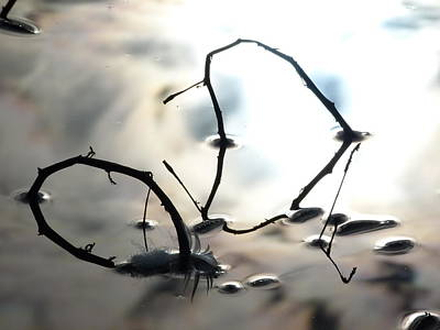 Photograph - Feather And Branches by Jane Ford
