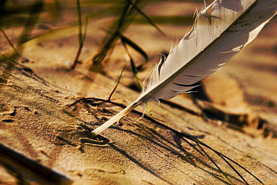 Feather And Sand Art Print by Raimond Klavins