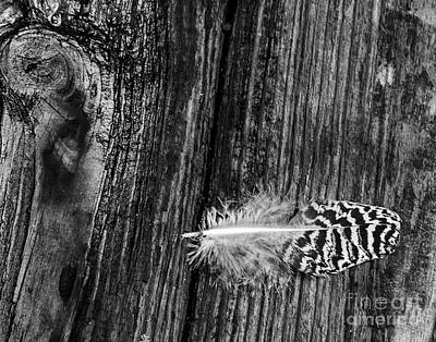 Photograph - Feather And Wood by Ken Frischkorn