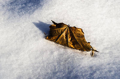 Feather Bed Of Snow Print by Alexander Senin