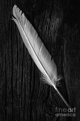White Feather Photograph - Feather by Edward Fielding