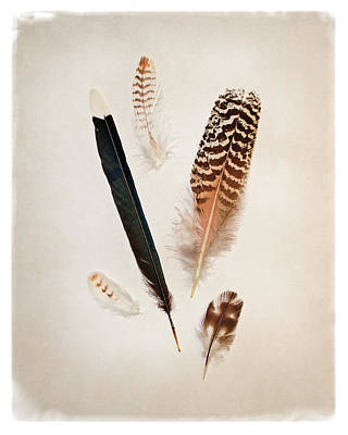 Vignette Painting - Feather Group II by Debra Van Swearingen
