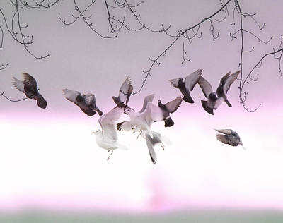 Flock Of Bird Photograph - Feather Light by Gothicrow Images