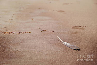Photograph - Feather On Sand by Cindy Garber Iverson