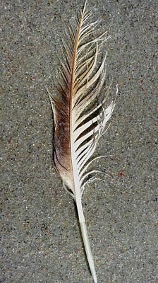 Feather On The Beach Art Print by Patricia Januszkiewicz