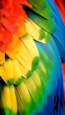 Realism Photograph - Feather Rainbow by Karen Wiles