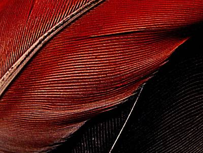 Photograph - Feather Study by Chris Berry