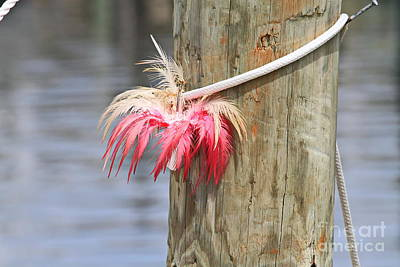 Posts Photograph - Feather Tackle And Post by Cathy Lindsey