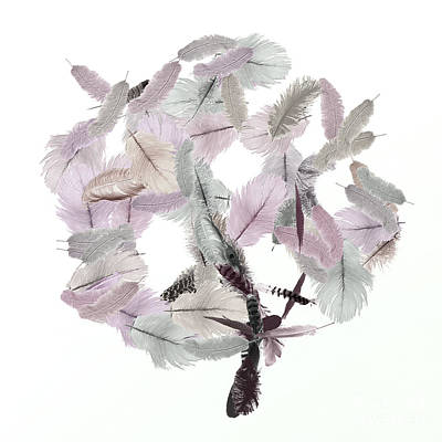 Royalty-Free and Rights-Managed Images - Feather Tree I by Anne Kitzman