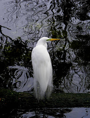 Photograph - Feathered Fantasy by Judy Wanamaker