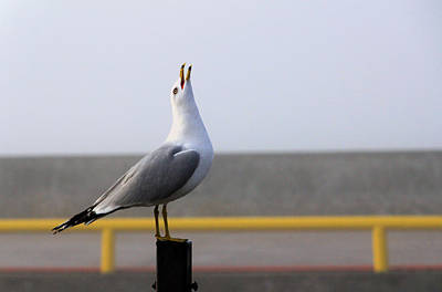 Photograph - Feathered French Fry Fetcher by Jim Vance