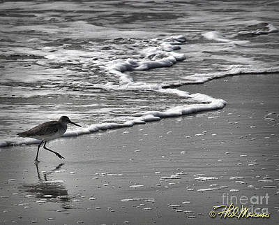 Feathered Friend At The Beach Art Print