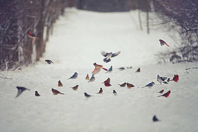 Winter Landscape Photograph - Feathered Friends by Carrie Ann Grippo-Pike