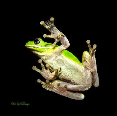 Photograph - Feathered Frog by Lucy VanSwearingen
