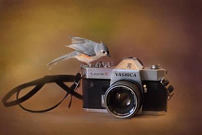Tufted Titmouse Photograph - Feathered Photographer by Jai Johnson