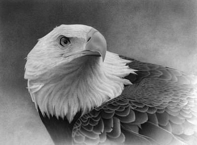 Soaring Drawing - Feathered Warrior by Doug Comeau