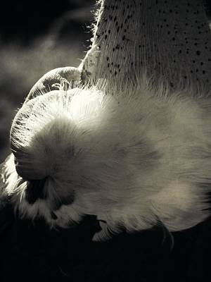 Photograph - Feathers by Leah Moore