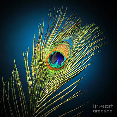 Ambient Photograph - Feathers by Mark Ashkenazi
