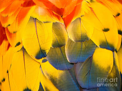 Photograph - Feathers by Robin Zygelman