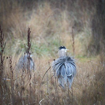 Photograph - Feathers Ruffled by Ronda Broatch
