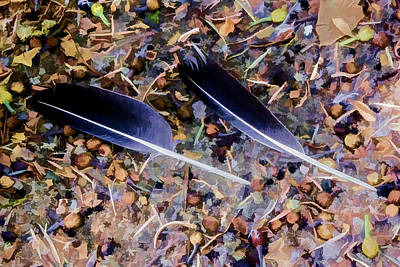Digital Art - Feathers by Photographic Art by Russel Ray Photos