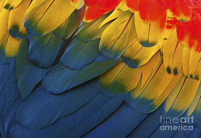 Abstract Graphics Rights Managed Images - Feathery Details... Royalty-Free Image by Nina Stavlund