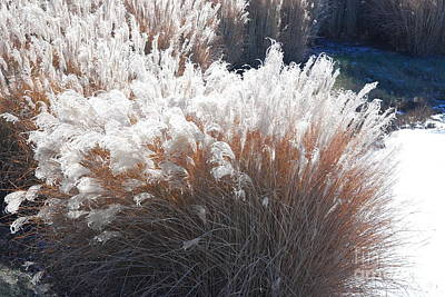 Photograph - Feathery Grass by Mark McReynolds
