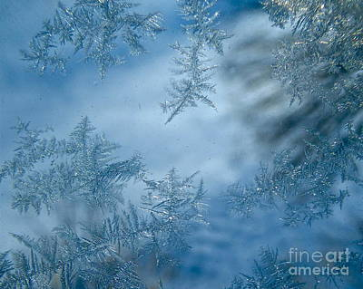 Photograph - Feathery Hoar Frost by Jean Wright