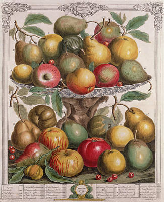 Apple Photograph - February, From Twelve Months Of Fruits, By Robert Furber C.1674-1756 Engraved By James Smith, 1732 by Pieter Casteels
