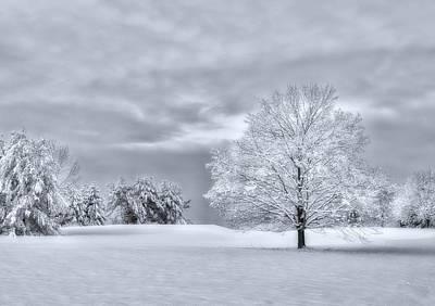 Photograph - February by Mark Fuller