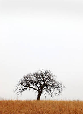February Tree Art Print by Christopher McKenzie