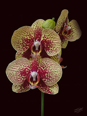 Photograph - February's Orchid by IM Spadecaller
