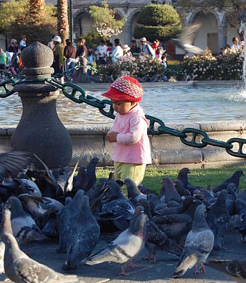 Photograph - Feed The Birds by Lew Davis