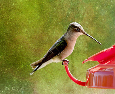 Digital Art - Feeding At The Feeder by J Larry Walker