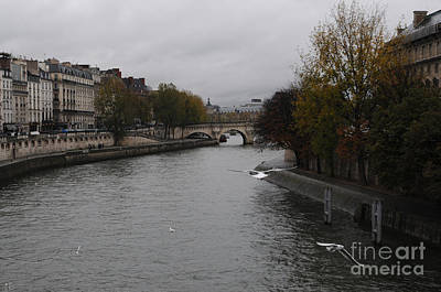 Photograph - Feeding Birds Over Seine River by Haleh Mahbod