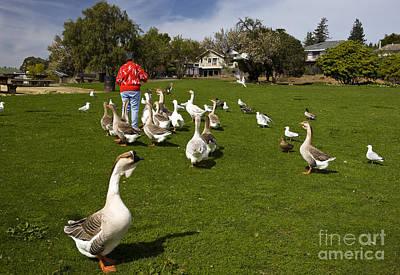 Feeding Ducks In A Park Art Print by Jason O Watson