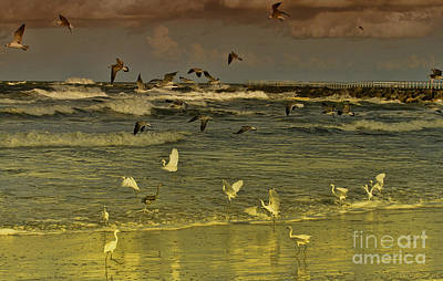Flying Seagull Photograph - Feeding Frenzy by Deborah Benoit