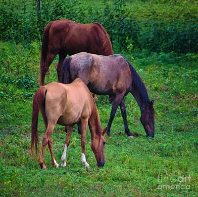 Photograph - Feeding Horses - Duvet Cover Sized by Scott Hervieux