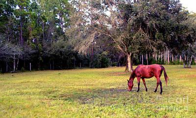 Horse Back Riding Photograph - Feeding In The Pasture by Jon Neidert