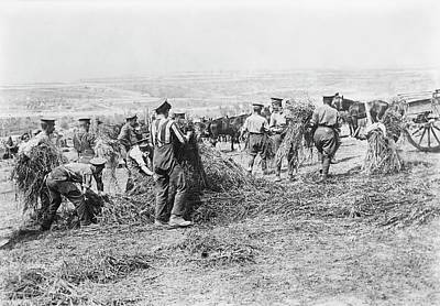 Feeding Photograph - Feeding Military Horses by Library Of Congress