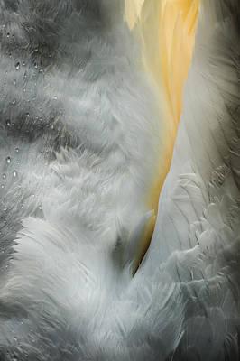 Feeding Swan Art Print by Andy Astbury
