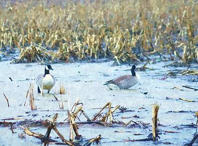 Canadian Geese Drawing - Feeding Swimming In The Field by Rosemarie E Seppala