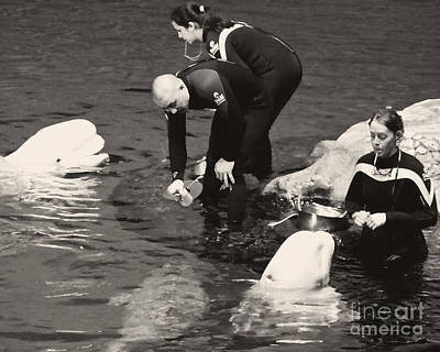 Photograph - Feeding The Belugas by Emily Kelley