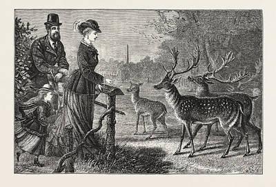 Phoenix Drawing - Feeding The Deer, Phoenix Park, Dublin, Ireland by Irish School