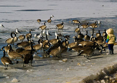 Photograph - Feeding The Geese by Matt Radcliffe