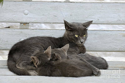 Benches Photograph - Feeding The Kittens by George Atsametakis