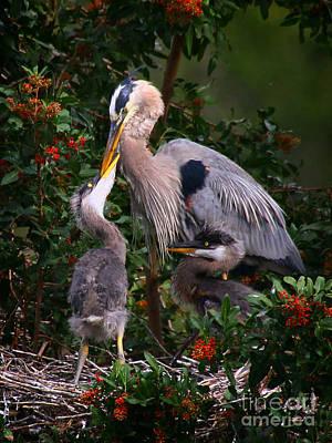 Photograph - Feeding Time by Barbara Bowen